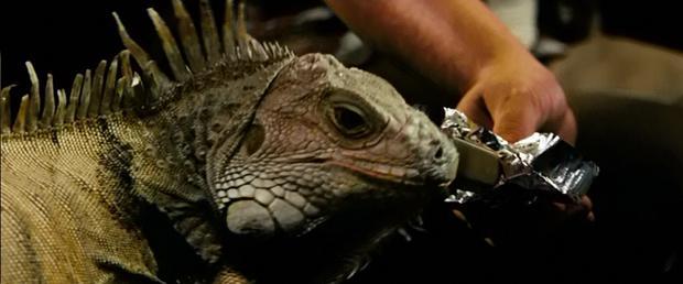 fast-iguana-2